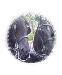 Bramble Farm Carriage Hire